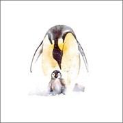 Blank Card Emperor Penguins (RT84696)